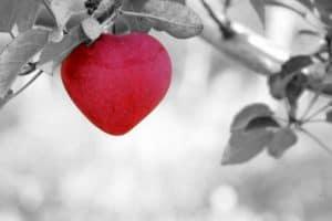 אהבה לנצח