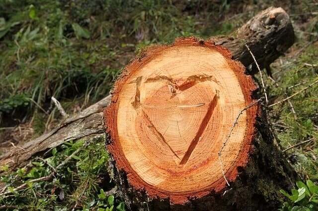 חריטה על עץ אהבה