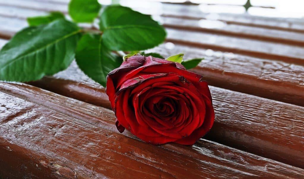 ורד לאישה