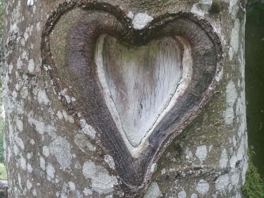 לב בתוך עץ
