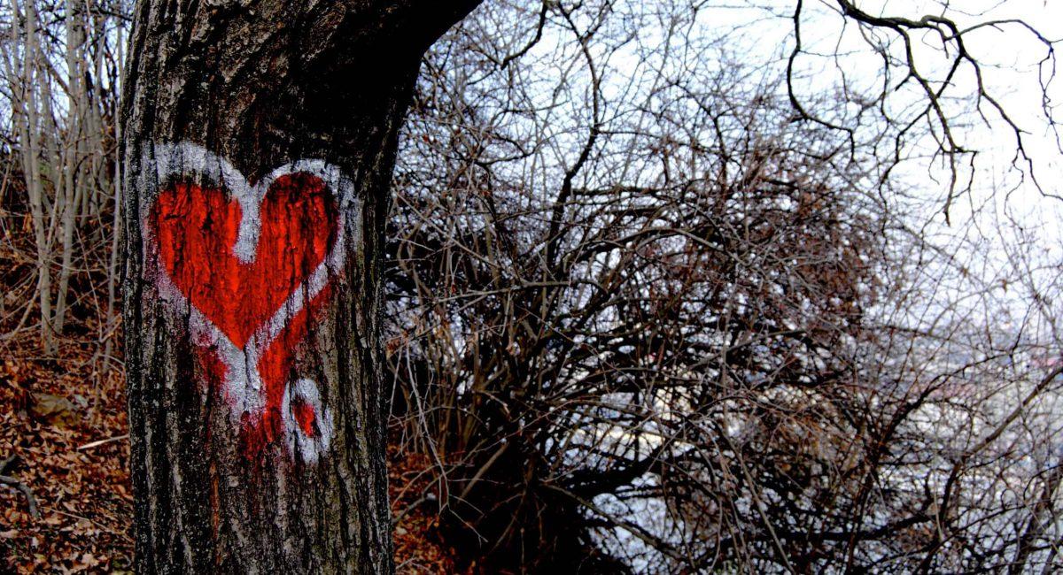 אהבה על העצים