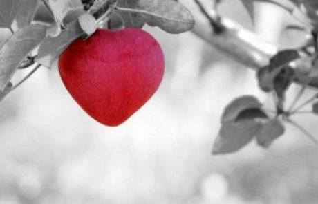 7 המלצות לשמר אהבה לנצח